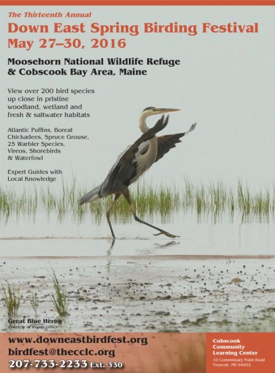 Birding Poster 8-5x11.indd
