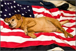 July4thDog on flag