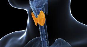thyroidb