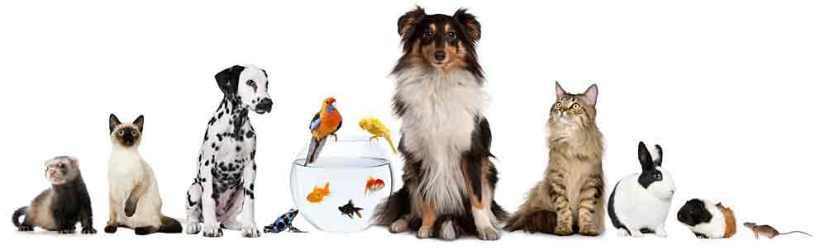 Mixed-Pets-1
